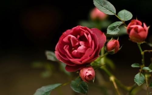 阿里向微信递了一束带刺的玫瑰?